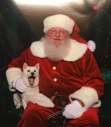 dog-toy-santa-mall-picture-kya-5