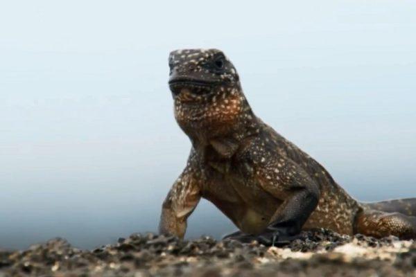 Игуана виртуозно спасается отполчища змей— Голливудский боевик