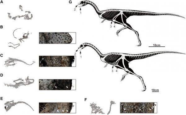 limnosaurus-01