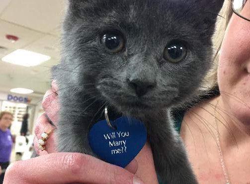 proposal-kitten-e1480780416127-1