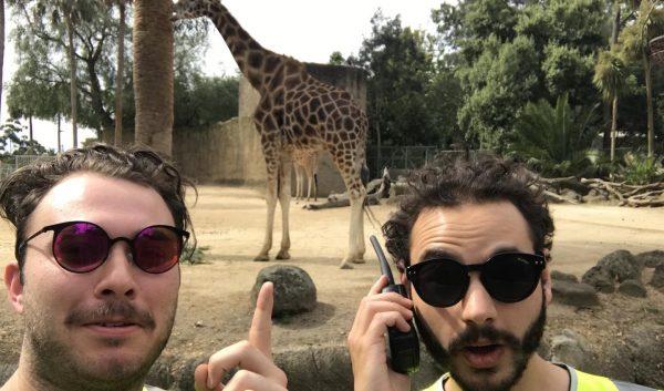 zoo-in-a-hi-vis