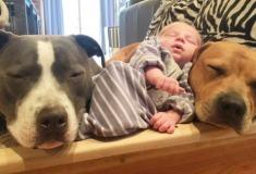 «Он — один из них». Четыре собаки и кошка, ухаживающие за новорождённым, растрогали пользователей инстаграма