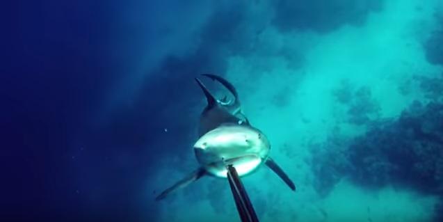 Видео: дайвер с потрясающей реакцией спасается от акулы