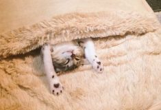 Японка купила себе обогреватель для ног, но котикам он нужен больше