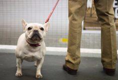«Подходящее наказание». Комик жестоко разыграл невоспитанную пассажирку с собакой в аэропорту