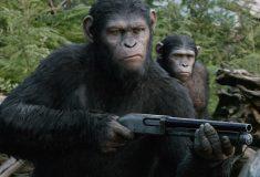 Шимпанзе — это хищник, а капча следит за вашей мышкой. Пользователи Reddit задают друг другу необычные вопросы и отвечают на них