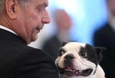 Очень фотогеничный пёс президента Финляндии Ленну очаровал пользователей твиттера