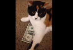 Очень наглый кот не даёт хозяйке забрать её деньги