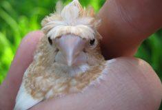 Просто маленький мальчик не знал, что нельзя есть живых птичек