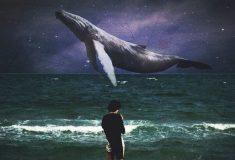 «ВКонтакте» блокирует хэштеги суицидальных флешмобов c китами. Но не совсем