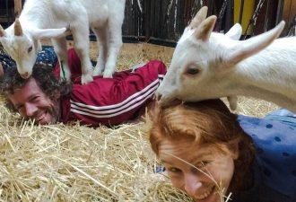 В Нидерландах открылась студия, где козы помогают людям заниматься йогой