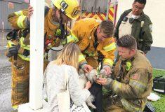 Пожарный сделал искусственное дыхание собаке, которая застряла в горящем доме