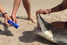 Как открыть пиво с помощью акулы и получить море негатива от подписчиков