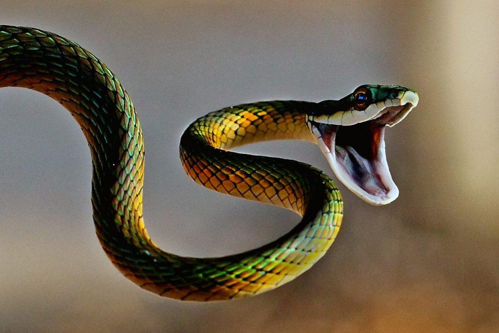 Смешные картинки змеек
