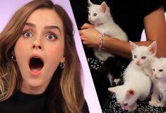 Видео: Эмма Уотсон играет с котятами и отвечает на вопросы фанатов
