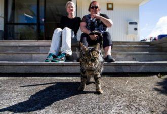 Двойная порция любви. Этот кот долго жил на два дома, но хозяйкам удалось раскрыть его обман