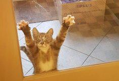 Этот котик очень хотел, чтобы его выпустили, и стал героем отличного фотошоп-баттла