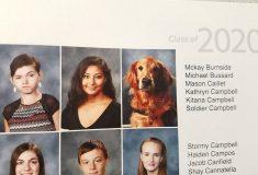 Фотография золотистого ретривера Солдата оказалась в школьном альбоме, и это заслуженно