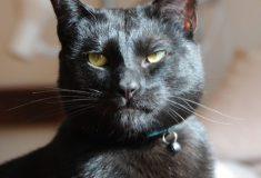 «Деспот и диктатор». Приют для животных пытается найти хозяина очень плохому котику