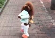 Парня раскритиковали из-за милого ролика с собачкой, в основе которого лежит жестокое обращение с животными