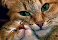 Вакансия дня: специалист по обнимашкам с котятками. Это не шутка