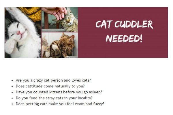 ВИрландии ищут обнимателя котов— Работа мечты