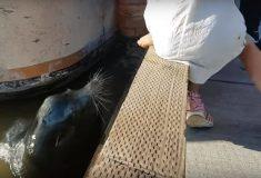 Морской лев утащил девочку в воду, потому что это вам не цирк
