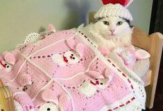 Из грязи в князи. Кошку спасли из приюта, а теперь она спит в собственной мини-кровати на перине