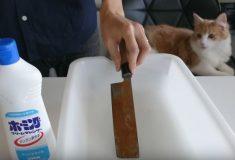 Японец смог так круто очистить ржавый нож, что результату удивился даже его котик
