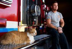 «Без него никак». Как кот-психотерапевт каждый день спасает пожарных, которые когда-то спасли его от голода