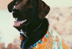«Мой Фасолька лучший». Владельцы дворняг поспорили с элитными собаководами о цене дружбы в твиттере