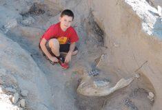Ребёнок споткнулся, играя в прятки, и спас редкий череп древнего стегомастодона от разрушения