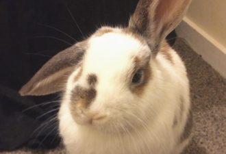 Этот кролик жуёт острые перчики чили как обычную морковку
