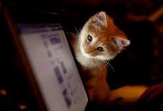 «Устроили тут балаган». Паблики «ВКонтакте» теперь могут комментировать друг друга, и они немного увлеклись