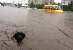 Мы загорали как могли. Настоящий потоп в Ульяновске в фотографиях из инстаграма