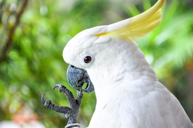 Картинки по запросу попугай