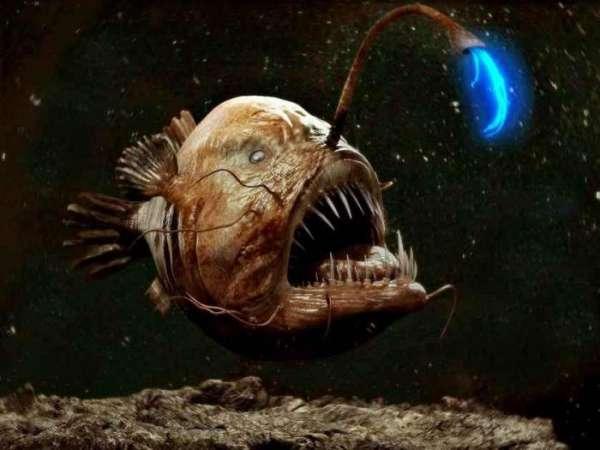 Опубликовано видео с чудовищным слизнем на восьмикилометровой глубине