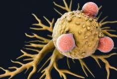 Отряд самоубийц. К средствам борьбы с раком добавился вирус полиомиелита (серьёзно)