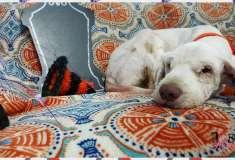 Срочное полуночное расчёсывание. Грумер спасла собаку, которая не могла ходить из-за колтунов