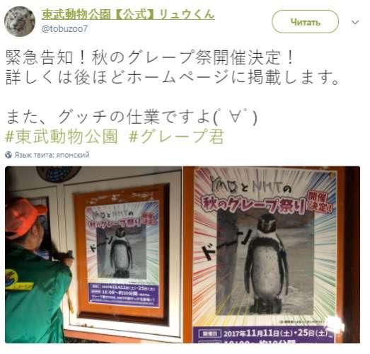 ВЯпонии скончался влюбившийся вкартонную аниме-девочку пингвин