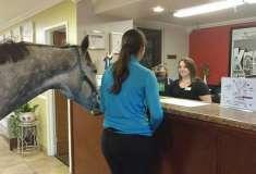 Как проверить отель на лояльность к домашним животным? Канадка привела в номер настоящую лошадь