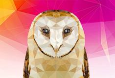 Тест. Что ты за птица в мире интернета?