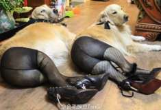 Нет, эти фото собачек в колготках не из борделей с животными. Это старый китайский мем