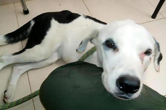 Ваэропорту Колумбии оттоски погибла брошенная собачка