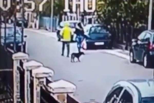 Уличный пес спас женщину от преступника