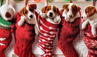 Игрушки, одежда и дрель для дедушки. Лучшие акции на подарки к Новому году