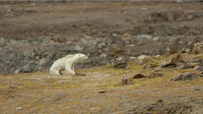 Видео сумирающим медведем ужаснуло пользователей