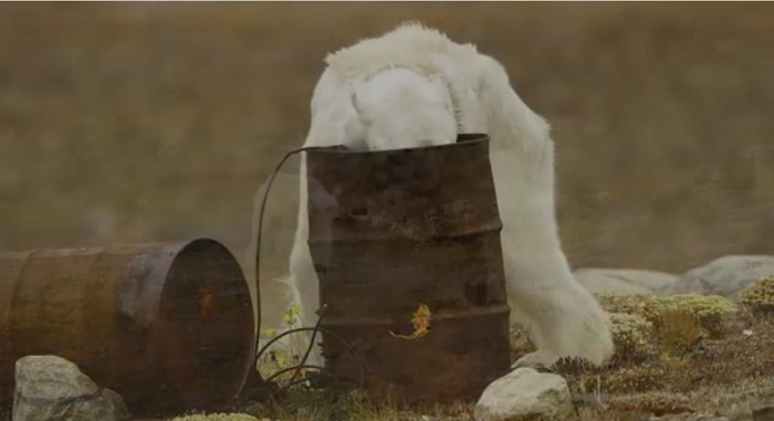 Соцсети шокировало видео сумирающим отголода медведем
