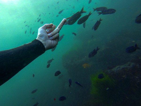 Инстаграмер объявил войну рыбам и уже больше года ныряет в море, чтобы показать им средний палец