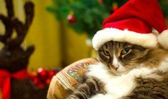 10 идей новогодних подарков, которые точно понравятся